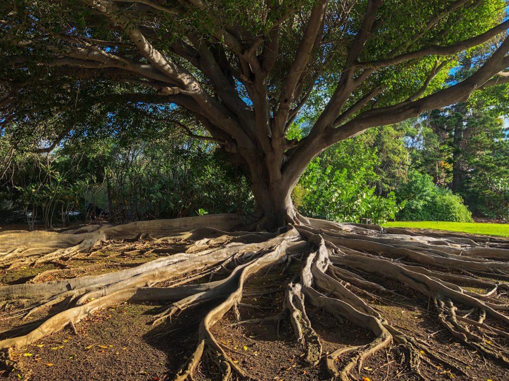 Belső Mező blog | Mantra és Hangfürdő est | Kovalik Orsolya